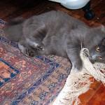 ペルシャ絨毯とペット
